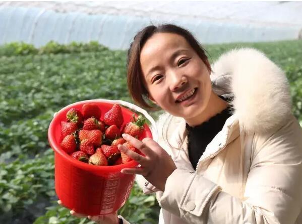 """首届优质草莓评比结束 东海""""红颜草莓""""获金奖"""