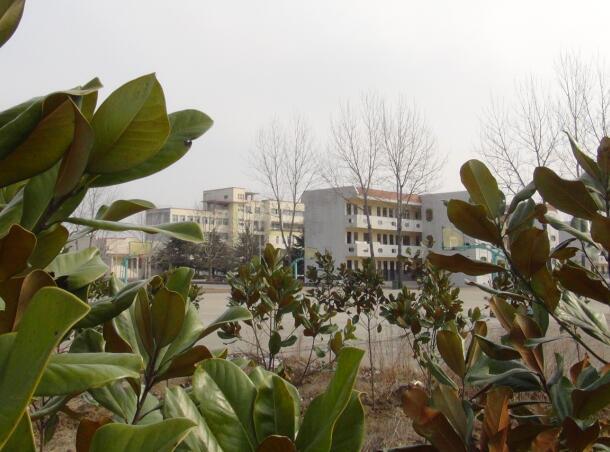桃林中学:植树造林正当时